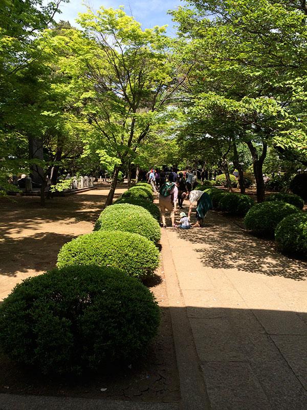 豪徳寺の道