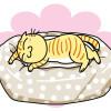 「ウォッシャブルラウンドベッド」はオーガニックコットンで、まるごと洗えちゃうベッドニャ!