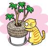観葉植物ホジホジ大好きニャーに、これがあればイタズラ出来ないニャ〜!「いたずら防止カバー」