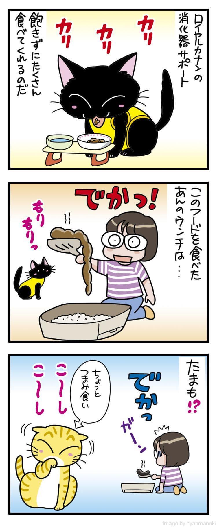 【ロイヤルカナン】猫用消化器サポート